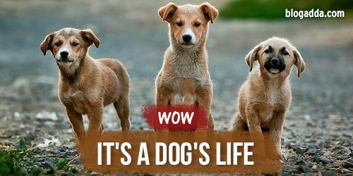 wow dogs llife