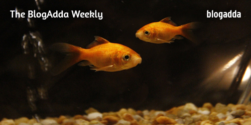 2-Fishes-in-an-aquarium-at-Home