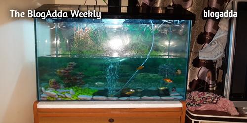 Fish-in-an-aquarium-at-Home