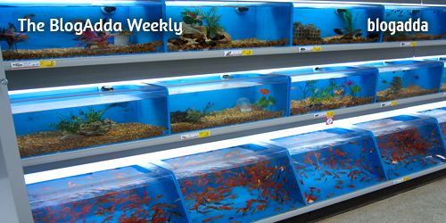 Fish-in-an-aquarium-at-a-Pet-Store